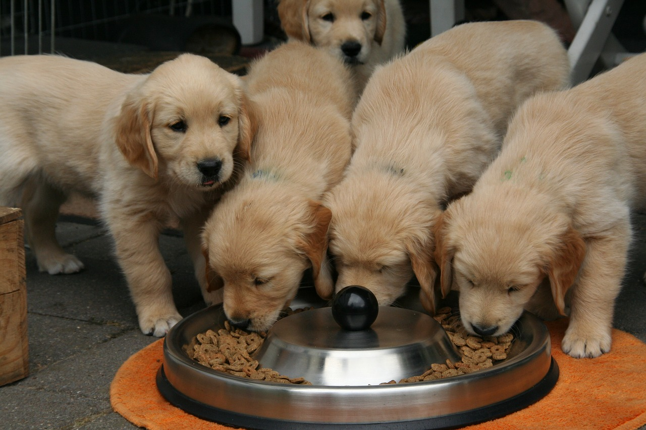 Jaką karmą karmić psa?