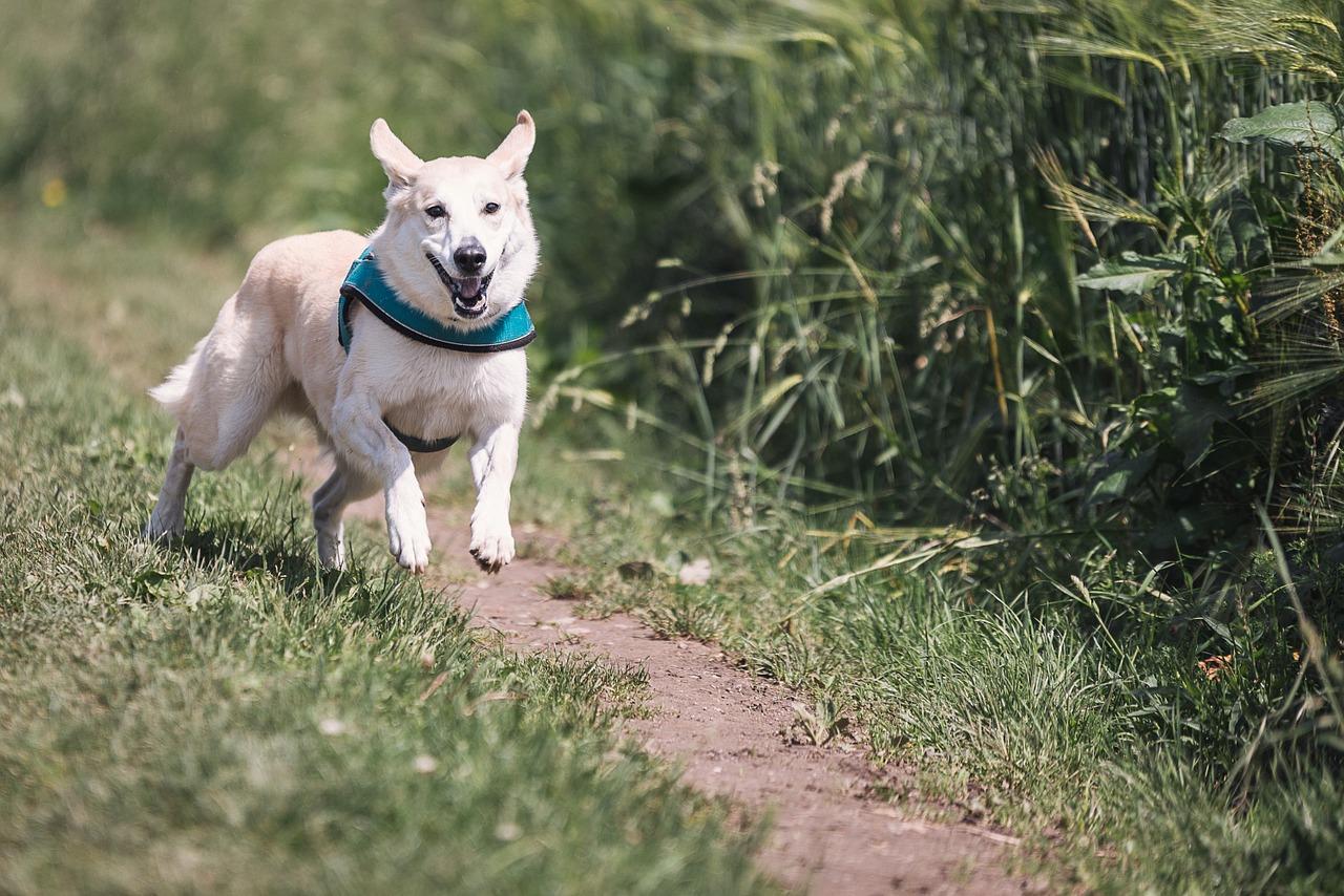 Jak uchronić się przed agresywnym psem?