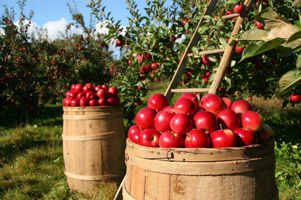 Rolnictwo - maszyny nowe czy używane?