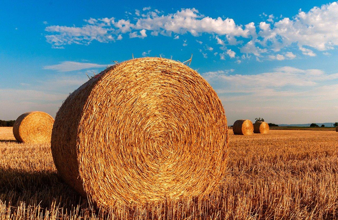 Czym wyróżnia się profesjonalny producent sprzętu rolniczego?